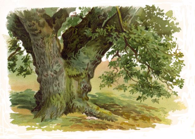 Picture of Trees And How To Paint Them