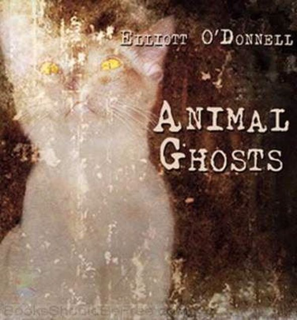 Picture of Animal Ghosts