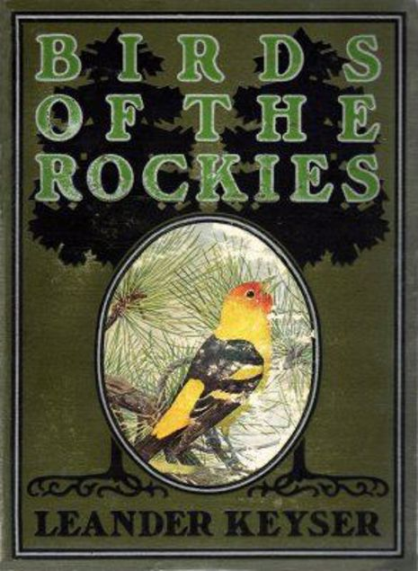 Picture of Birds Of The Rockies