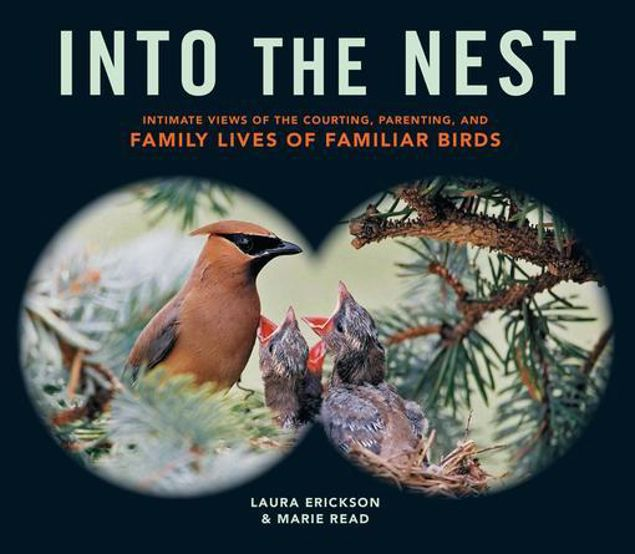 Picture of Into the Nest: Intimate Views of the Courting, Parenting, and Family Lives of Familiar Birds