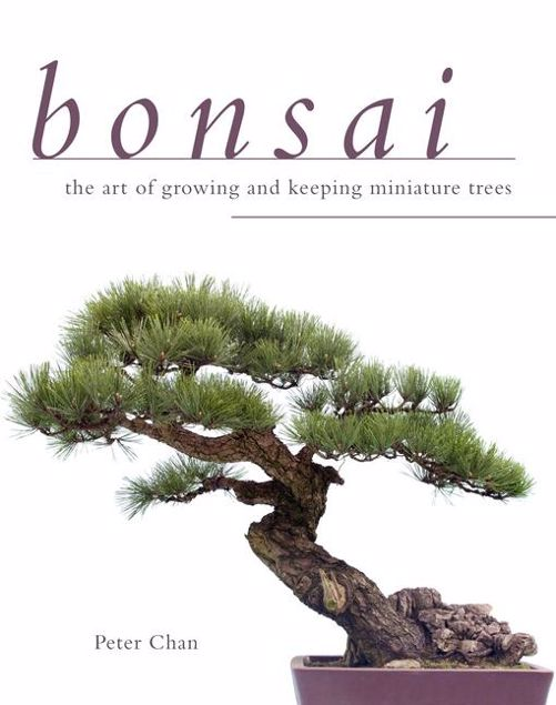 Picture of Bonsai: The Art of Growing and Keeping Miniature Trees